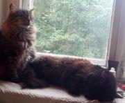 Передержка котов и кошек