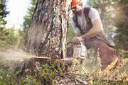 Спил деревьев,  кустов,  уборка участка